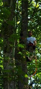 LumberjackUpATree