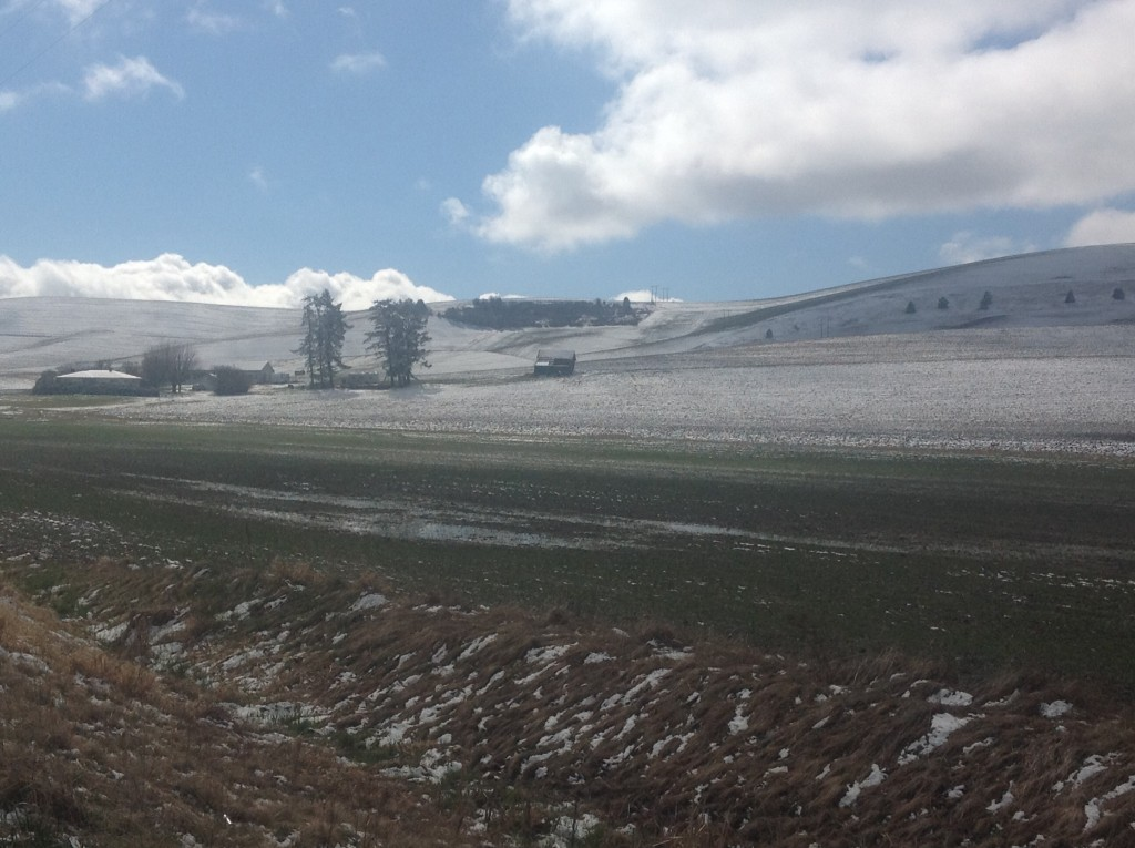 Snow on Winter Wheat