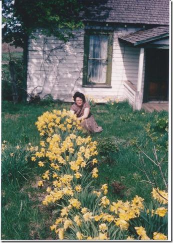Old House Ellen Daffodils